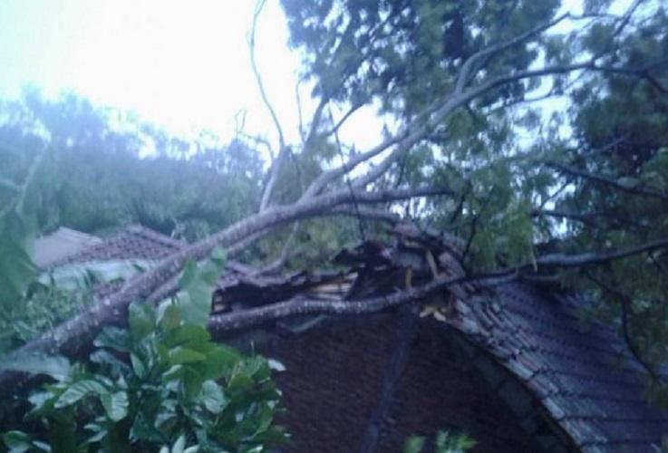 Hujan Deras Disertai Angin Memakan Korban